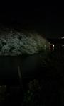 090402_2113~夜桜�B.jpg