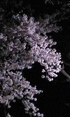 090407_2112~夜桜.jpg