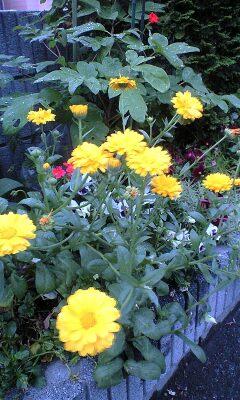 090510_1751~会社の庭.jpg