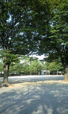 090813_1618~コミセン奥より.jpg