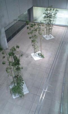 091202_1652~竹.jpg