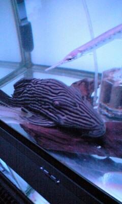 091231_1504~デカい魚.jpg