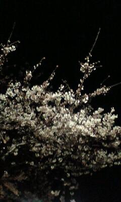100329_2209~播磨坂�A.jpg