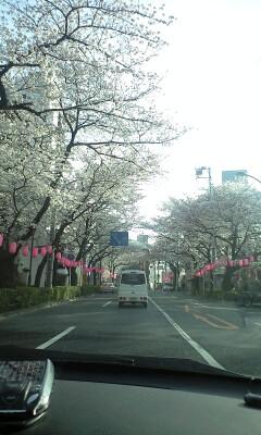 100401_1628~中野通り�@.jpg
