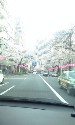 100401_1629~中野通り�A.jpg