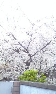 100401_1717~新坂�B.jpg