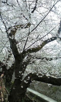 100403_1607~哲学堂公園�A.jpg