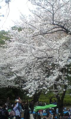 100403_1613~哲学堂公園�C.jpg
