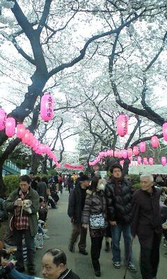100403_1640~桜まつり�@.jpg
