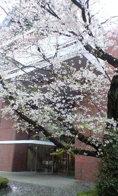 100407_1557~立大桜�A.jpg
