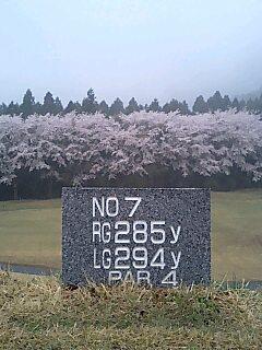 7番Hの桜.jpg