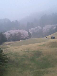 遠目の桜満開.jpg