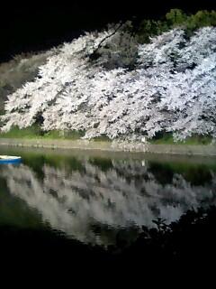 千鳥ヶ淵堀に映る.jpg