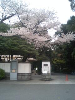 庭園美術館桜.jpg